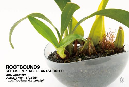 rootbound9_4